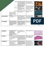 enfermedades hidricas.docx