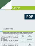 Malassezia.pptx