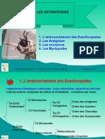 2-Arthropodes-Arachnides-Myriapodes