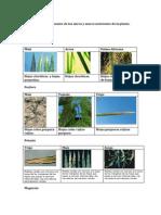 deficiencias de nutrientes en hojas.docx