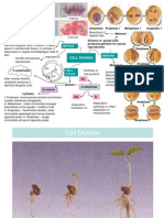 CD f4 Cell Division n Tissue