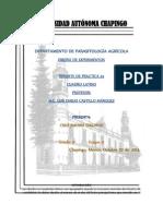 reporte 4 cuadro latino diseños.docx