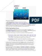 Ciclo biogeoquímico.doc