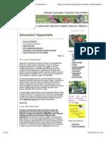 Istruzioni Hypertufa2
