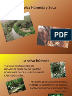 SELVA SECA Y SELVA HUMEDA.pdf