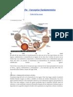 GEOLOGIA-FORMACION DE ROCAS.doc