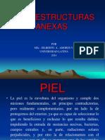 Tema 8.  PIEL Y ESTRUCTURAS ANEXAS. 2014. U.latina..pptx