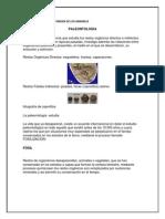 Paleontologia.docx