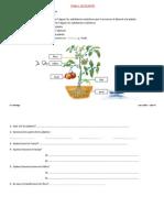 T.1-LES-PLANTES1.pdf
