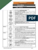 Informativa6 - etapas meiose.pdf