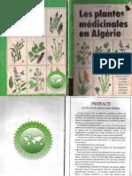 Fines herbes-Suffolk Herbes-Vert fenouil-Foeniculum vulgare-paquet illustré