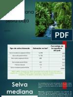 Selva mediana.pptx