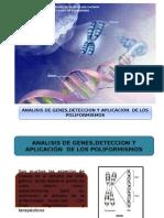 biologia molecular poliformismos.pptx