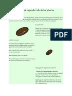 Tipos de reproducción de las plantas.docx