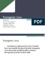 BSA3D Grp12 Transgenic Cow