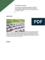 informacion de pimenton.docx