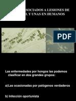 1 Hongos Caceres.pdf