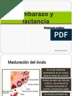 embarazoylactanciafisiologia-130518220553-phpapp02.pptx