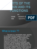 Parts of the Brain and Its Fungtions