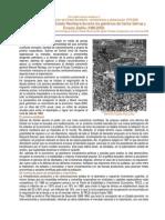 Salinato.pdf
