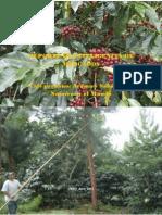Informe de inteligencia de mercado del café_2012.pdf