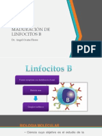 UNID Maduraci+¦n Linfocitos B.pdf