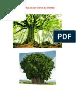 les plus belles arbres du monde.pdf