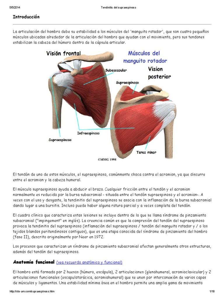 Increíble Hombro Tendones Y Ligamentos Anatomía Colección de ...