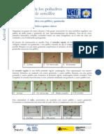 piliedros1.pdf