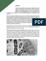 MICROSCOPIA  ELECTRONICA.docx