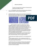 PRACTICA DE ANTIPILLING.pdf