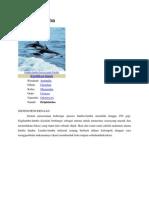 sistem pencernaan lumba lumba.docx