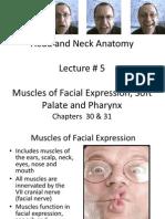 Lecture 5 Mus Facial Exp