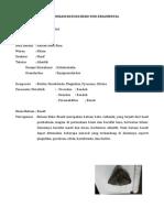 Identifikasi Batuan Beku Non