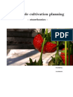 Report Strawberry Cultivation Plan