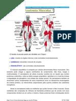 Anatomia Muscular - Reflexos