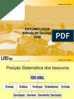 11ª Aula  Entomologia 2008 (Coleoptera)