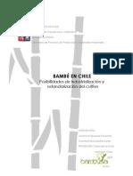 Bambu en Chile Posibilidades de Industrializacion