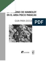 El pingüino de Humboldt en el area Pisco Paracas