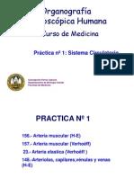 Práctica 1 - Aparato Circulatorio