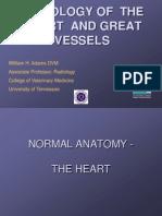 cardiology rad.ppt