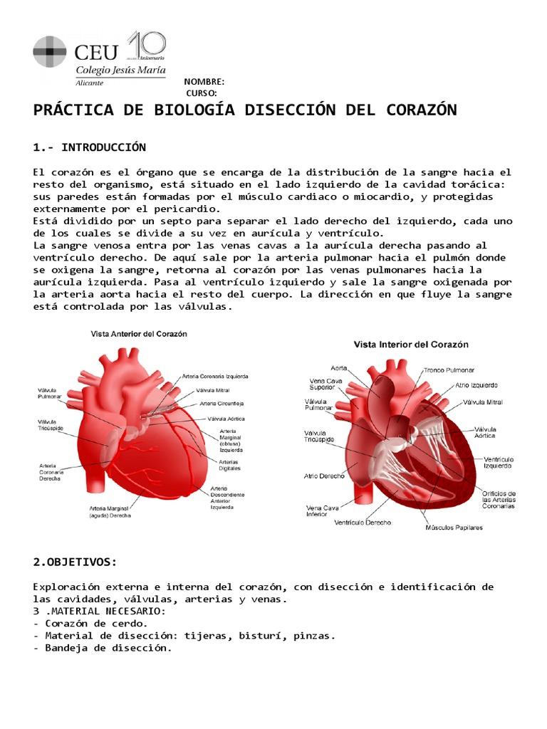 Excepcional La Anatomía De Las Respuestas Fetales De Cerdo Molde ...