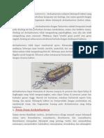 Jenis Dan Peranan Archaebacteria