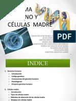 Genoma y células madre
