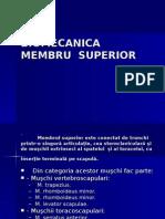 Biomecanica membrului superior