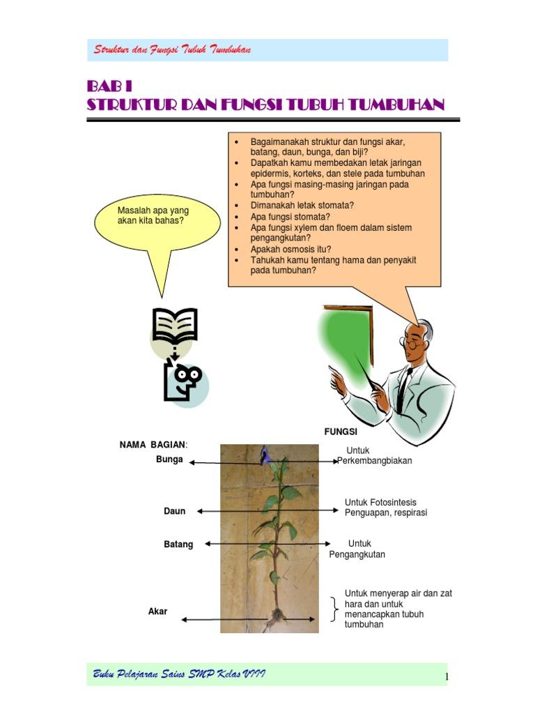 Bab 1 viii struktur dan fungsi tubuh tumbuhan sisca ccuart Image collections