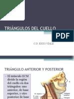 Clase 5 Triangulos Del Cuello
