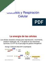 Glucolisis-Respiracion