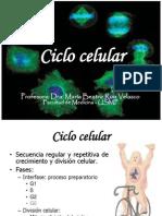 Nucleo Celular Ciclo Celular