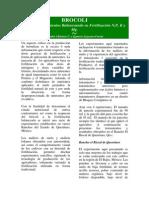 BROCOLI+Mejores+Rendimientos+Balanceando+su+Fertilización+N,P,+K+y+Mg.